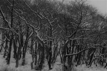 Around Muker in winter (10)