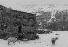 Around Muker in winter (20)