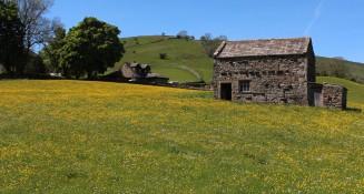 Muker meadows, flowers, wildlife (15)