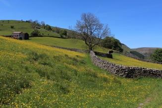 Muker meadows, flowers, wildlife (16)