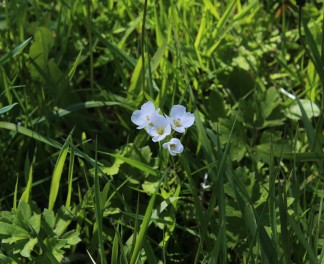 Muker meadows, flowers, wildlife (18)