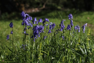 Muker meadows, flowers, wildlife (21)