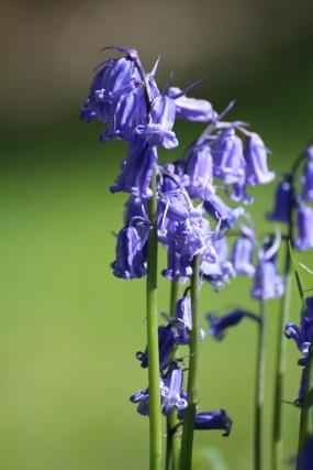 Muker meadows, flowers, wildlife (22)