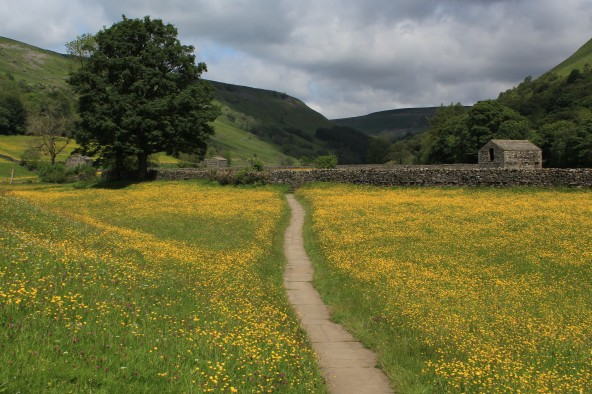 Muker meadows, flowers, wildlife (32)