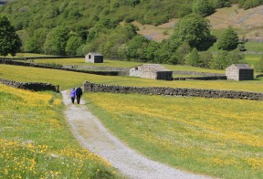 Muker meadows, flowers, wildlife (35)
