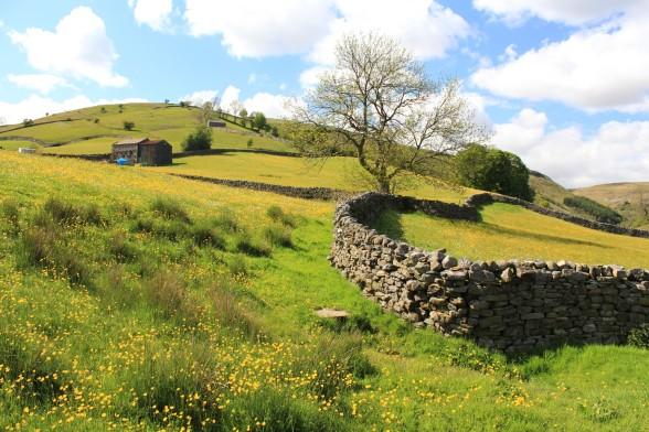 Muker meadows, flowers, wildlife (37)