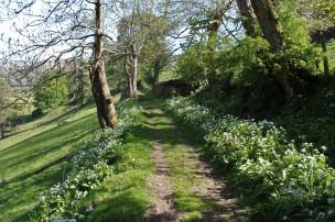Muker meadows, flowers, wildlife (38)