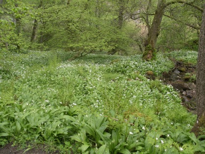 Muker meadows, flowers, wildlife (4)