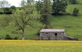 Muker meadows, flowers, wildlife (44)