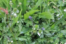 Muker meadows, flowers, wildlife (48)