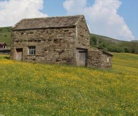 Muker meadows, flowers, wildlife (52)