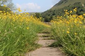 Muker meadows, flowers, wildlife (53)