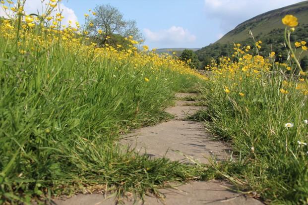 Muker meadows, flowers, wildlife (54)