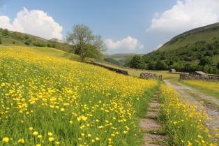 Muker meadows, flowers, wildlife (55)