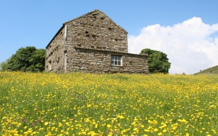 Muker meadows, flowers, wildlife (56)