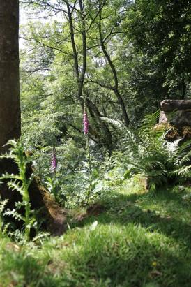 Muker meadows, flowers, wildlife (57)