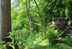 Muker meadows, flowers, wildlife (59)