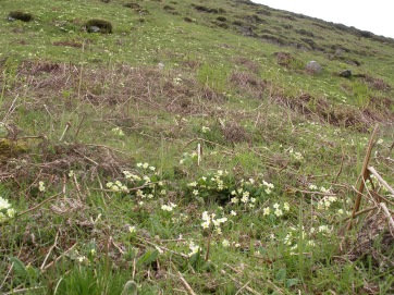 Muker meadows, flowers, wildlife (6)