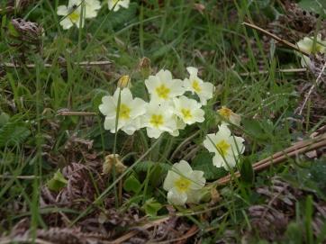 Muker meadows, flowers, wildlife (7)