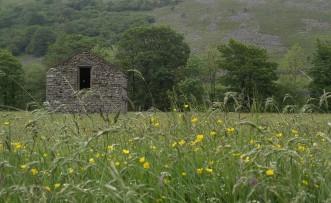 Muker meadows, flowers, wildlife (72)