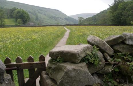 Muker meadows, flowers, wildlife (73)