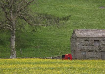 Muker meadows, flowers, wildlife (74)