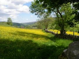 Muker meadows, flowers, wildlife (80)