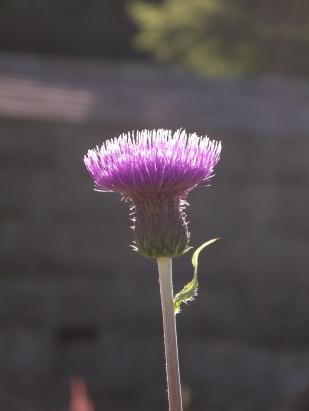 Muker meadows, flowers, wildlife (82)