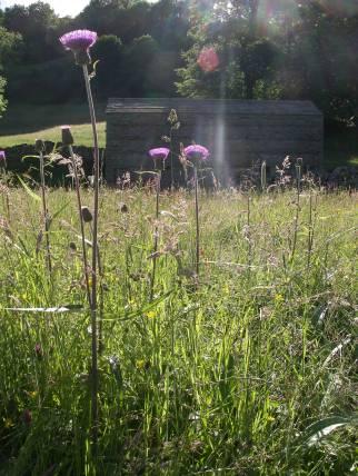 Muker meadows, flowers, wildlife (83)
