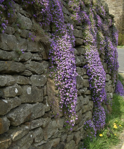 Muker meadows, flowers, wildlife (85)