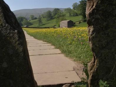 Muker meadows, flowers, wildlife (86)