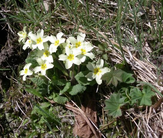 Muker meadows, flowers, wildlife (89)