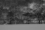 Muker Village in winter (59)