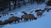 Muker Village in winter (70)
