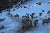 Muker Village in winter (71)